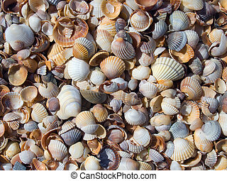 Cockleshell beach surface (sea-resting background)
