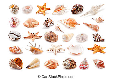 Collection of cockleshell isolated on white