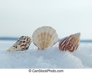 Cockleshells on a snow in the winter
