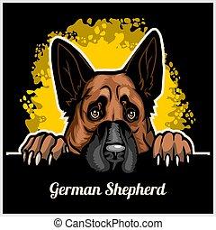 Color dog head, German Shepherd breed on black background