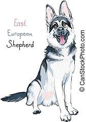 Color sketch dog East European shepherd breed