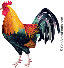 colorful and high detailed rooster photo realistic vector