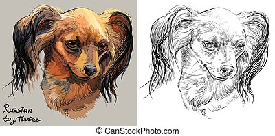 Colorful and monochrome hand drawing vector portrait of Russian long-haired toy Terrier