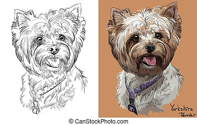 Colored Yorkshire Terrier portrait on orange background and and black color on white background vector hand drawing illustration