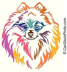 Colorful decorative portrait of Dog Pomeranian Spitz vector illustration