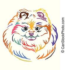 Colorful decorative portrait of Pomeranian Dog vector illustration