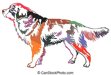 Colorful decorative standing portrait of Bernese Mountain Dog vector illustration