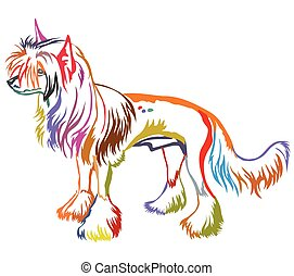 Colorful decorative standing portrait of Chinese Crested Dog vector illustration