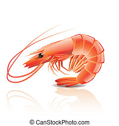 Cooked shrimp isolated on white photo-realistic vector illustration