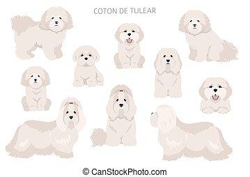 Coton de Tulear clipart. Different poses, coat colors set.  Vector illustration