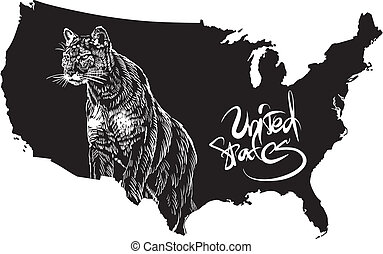 Cougar and U.S. outline map. Black and white vector illustration. Puma concolor.