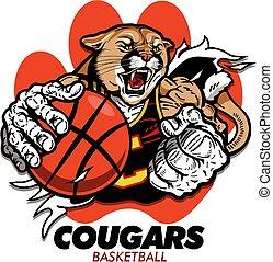 cougars basketball