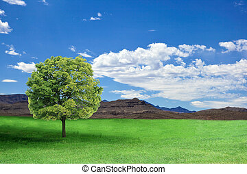 Country scene in summer time with alone tree