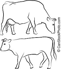 farm animals, black and white cattle, grazing cow and walking bull