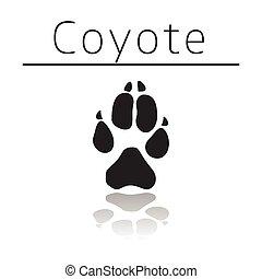 Coyote animal track
