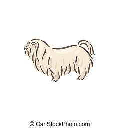 Cute dog Maltese breed pedigree vector illustration