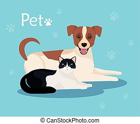 cute dog with cat in background blue with pawprints