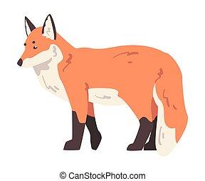 Cute Fox Wild Forest Mammal Animal Cartoon Vector Illustration
