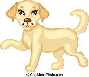 Cute puppy running