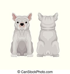 Cute sitting french bulldog, front and back view. Small breed of domestic dog. Human s best friend. Flat vector design