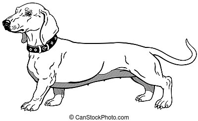 dog smooth-haired dachshund breed, side view outline image