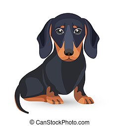 Dachshund dog with smooth black fur and long ears sits on hind legs, lisolated vector illustrations