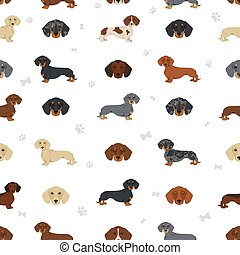 Dachshund short haired seamless. Different poses, coat colors set.  Vector illustration