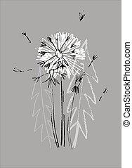 Decor printable art. Hand drawn monochrome vector illustration of dandelion flower on gray background