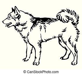Decorative portrait of Dog Finnish Spitz vector illustration