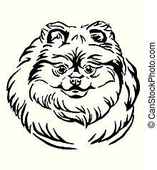 Decorative portrait of Pomeranian Dog vector illustration