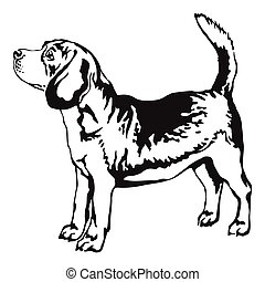 Decorative portrait of standing in profile beagle, vector isolated illustration in black color on white background