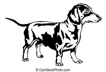 Decorative standing portrait of dog dachshund, vector illustration