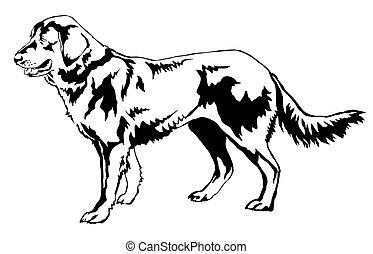 Decorative standing portrait of Dog (shepherd) vector illustration