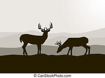 Deer silhouette in the wild