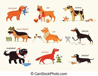 Dog breeds. Working dogs