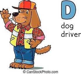 Dog driver Animals and professions ABC. Alphabet D