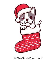 Dog in Christmas sock