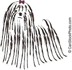 Dog maltese vector illustration