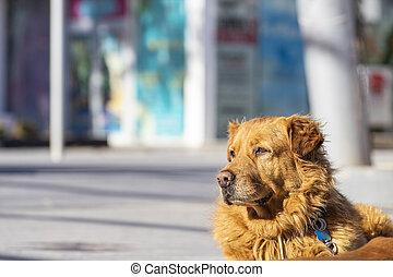 posing in the street