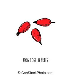Dog rose berries. Vector cartoon illustration. Isolated objects on white.