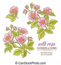 dog rose flowers vector set