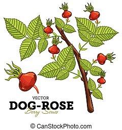 Dog-Rose Set, Vector.