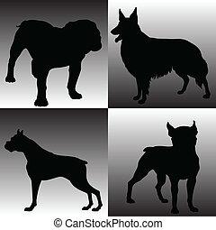 dog smart illustration
