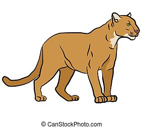 drawing illustration of the wild mountain lion