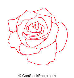 Drawing rose on a white background