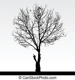 A dried dead tree.