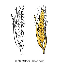 Ear of wheat. Vector vintage color and monochrome illustration.