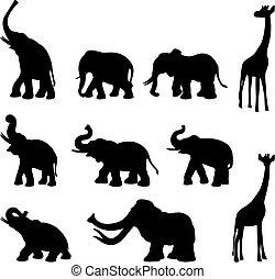 Big wild animals black and white silhouettes