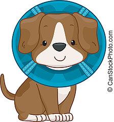 /Illustration of a Cute Dog Wearing an Elizabethan Collar