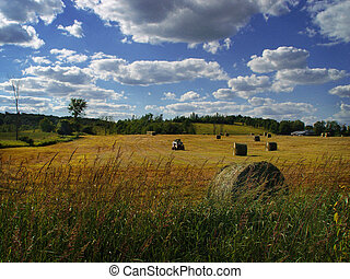 The farmers field. Ontario, Canada